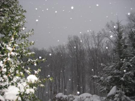 Snowing among the trees